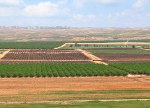 רכישת קרקע חקלאית